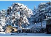 Darjeeling - Gangtok - Lachen - Pelling - Kalimpong Tour  Package