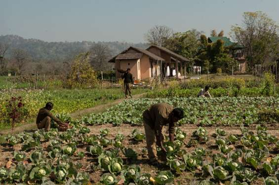 Farm of jims jungle retreat