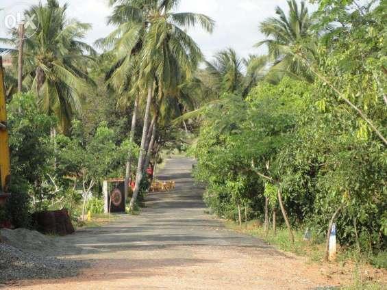 Jeme holiday resort (chathrapatti village)