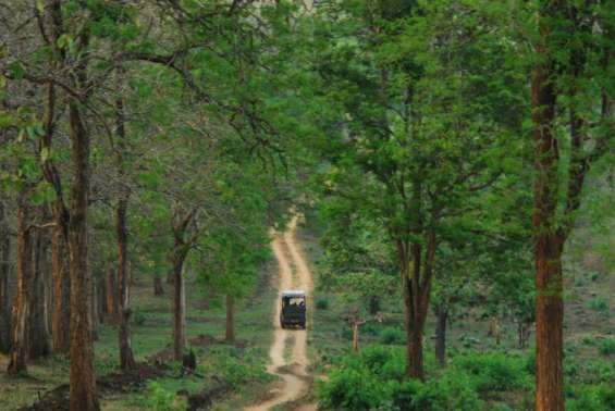 Pictures of Kabini river lodge - nagarahole national park 8