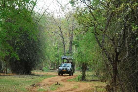 Pictures of Kabini river lodge - nagarahole national park 7