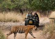 Ranthambore weekend tour ex delhi