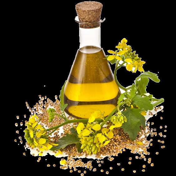 Mustered oils