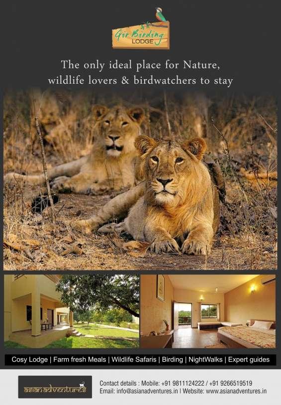 Summer lion tracking tour packages | gir wildlife and birding tours | gir birding lodge