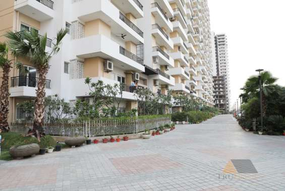 Pictures of Ace city luxurious and comfortable homes at rs 3295 psf |9250677000 8