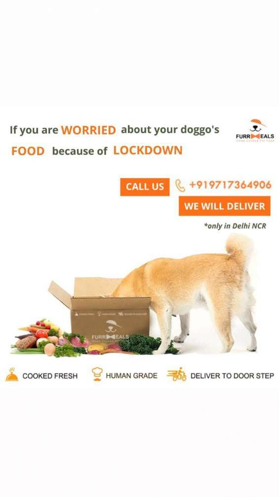 Home cooked food for pets in delhi