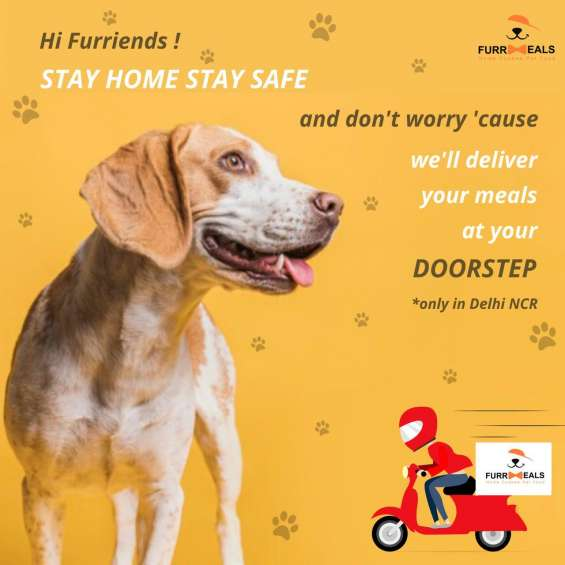 Best dog food for dogs in delhi